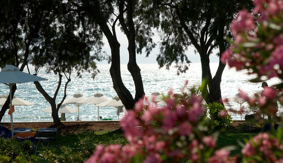 Mediterranean gardens and flowers